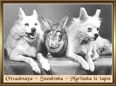 http://ngasaltulisblog.files.wordpress.com/2013/06/ad382-otvazhnaya-snezhinka-marfusha-le-lapin.jpg?w=400&h=295